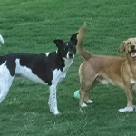 Dog Walking Service in Gwinnett County, GA