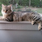 Cat laying on window sill