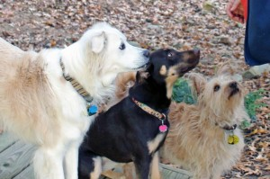 Hope, April & Danny wait for  cookie.            Photo by Cindy Flanary