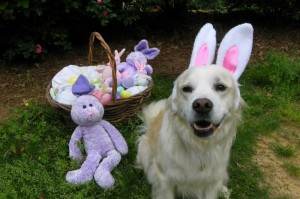 Hope is the Easter Bunny
